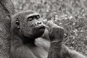 Angela Rath - Gorilla Deep in Thought...