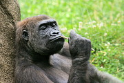 Angela Rath - Gorilla Deep in Thought