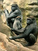 Socialization Prints - Gorilla Family Print by Spirit Baker