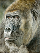 Gorilla Paintings - Gorilla by True Image