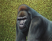 Animals Framed Prints - Gorilla with a Hedge Framed Print by James W Johnson