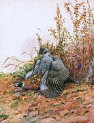 Pheasant Paintings - Goshawk Attacks Pheasant by Pg Reproductions