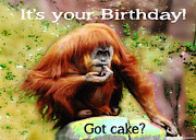 Orangutan Digital Art Metal Prints - Got Cake Metal Print by Lizi Beard-Ward