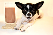 Puppies Photo Originals - Got Chihuahua by Joyce Marie Martin