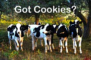 Cookies And Milk Prints - Got Cookies? Print by Terri Gostola