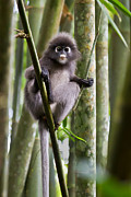 Primate Prints - Got Milk Print by Ashley Vincent