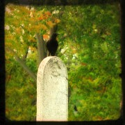 Gothic Digital Art Posters - Gothic Autumn Poster by Gothicolors With Crows