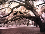 Fantasy Surreal Spooky Photography Framed Prints - Gothic Surreal Oak Trees and Ravens South Carolina Framed Print by Kathy Fornal