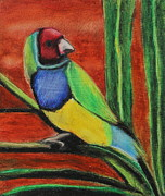 Animals Pastels Originals - Gouldian Finch by Jeanne Fischer