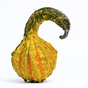 Food And Drink Metal Prints - Gourd Metal Print by Bernard Jaubert