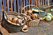 Washtubs Photos - Gourds And More Gourds by Kenny Francis
