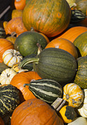 Orange Pumpkins Prints - Gourds Print by Rebecca Cozart