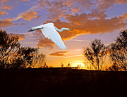 White Birds Photos - Graceful Fly By by Adele Moscaritolo