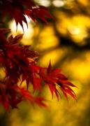 Yellow Leaves Prints - Graceful Leaves Print by Mike Reid