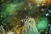 Photo Manipulation Photo Posters - Grackle in the Willow Poster by EricaMaxine  Price