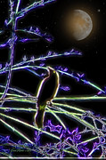 EricaMaxine  Price - Grackle in the Willow...