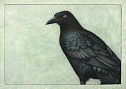 Blackbird Drawings Metal Prints - Grackle Metal Print by James W Johnson