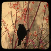 Gothicolors Donna Snyder - Grackle on branch