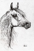 Horses Drawings - Grafik polish arabian horse ink drawing 1 by Angel  Tarantella
