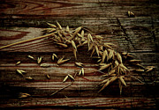 Oats Photos - Grain by Odd Jeppesen