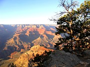 Engaging Photo Prints - Grand Canyon 63 Print by Will Borden