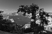 Landscape Prints Prints - Grand Canyon 8 - Landscape Photography Print by Laria Saunders