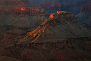 Alpenglow Prints - Grand Canyon Alpenglow 3 Print by Stephen  Vecchiotti