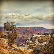 Grand Canyon Print by Colin and Linda McKie