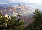 Featured Originals - Grand Canyon  by Iconic Images Art Gallery David Pucciarelli