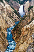 Deep Blue River Prints - Grand Canyon of Yellowstone Print by Bill Gallagher