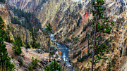 Grand Canyon Of Yellowstone Print by Charles Kosina