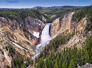 Yellowstone Photos Prints - Grand Canyon of Yellowstone National Park 3 Print by Thomas Woolworth