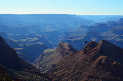 Beauty In Nature Art - Grand Canyon Soaring Bird of Prey by Shawn OBrien
