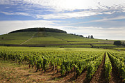 Vineyard Landscape Framed Prints - Grand cru and premier cru vineyards of Aloxe Corton. Cote de Beaune. Burgundy. Framed Print by Bernard Jaubert