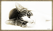 Short Hair Framed Prints - Grand Kitty Cuteness 3 High Key Framed Print by Andee Photography