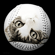 Baseball Art Mixed Media Posters - Grand Kitty Cuteness Baseball Square B W Poster by Andee Photography
