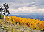 Outlook Painting Prints - Grand Mesa Autumn Aspen Colorado Print by Janice Rae Pariza