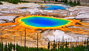 Yellowstone National Park Framed Prints - Grand Prismatic Spring Limited Edition Framed Print by Greg Norrell