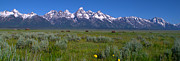 Snow Photo Prints - Grand Teton Bison Print by Brian Harig