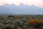 Wildlife Pics Prints - Grand Teton Moose Print by Brian Harig