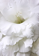 Ivory Flowers Framed Prints - Grandiose Ivory Gladiola Flower Framed Print by Jennie Marie Schell