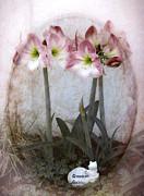Judy Hall-Folde - Grandmas Amaryllis Garden