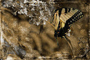 Tiger Swallowtail Digital Art Posters - Grandmas Butterfly Poster by EricaMaxine  Price