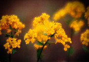 All - Soft Focus Lustrous by R Thomas Brass