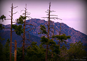 Prescott Framed Prints - Granite Mountain Through the Trees Framed Print by Aaron Burrows