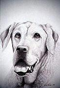 Chocolate Lab Drawings - Grant by Rick Hansen
