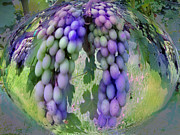 Purple Grapes Framed Prints - Grape Globe Framed Print by Pepsi Freund