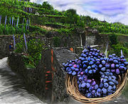 Italian Wine Digital Art Framed Prints - Grape Grove Framed Print by Lisa Redfern