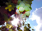 Elvira Ladocki - Grape In Sunshine