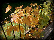 Grape Leaves Posters - Grape Leaves on Fence Poster by Karyn Robinson